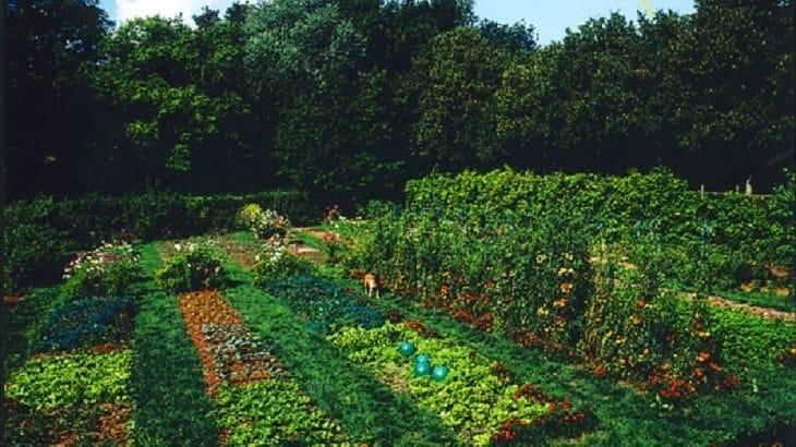 Conseil jardinage tous les conseils pour votre jardin for Tous pour le jardin