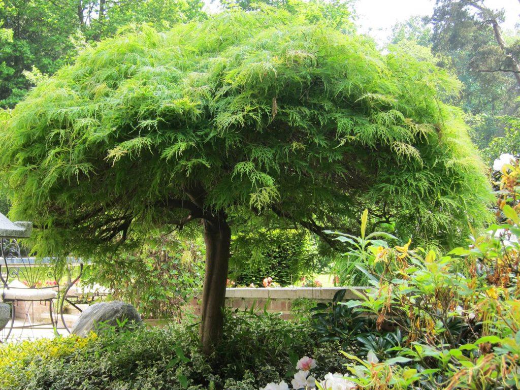 Nuisance arbre