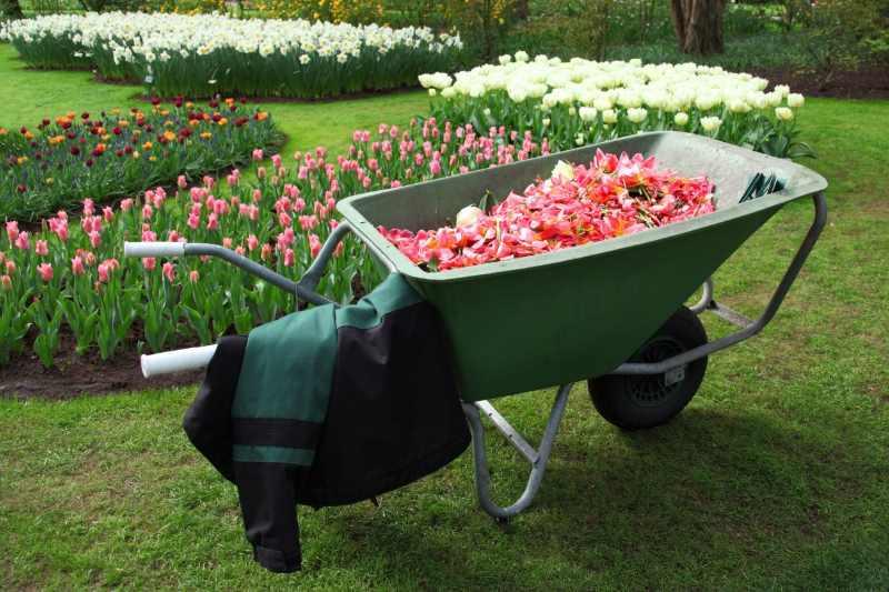 Conseil jardinage tous les conseils pour votre jardin for Jardinage conseil