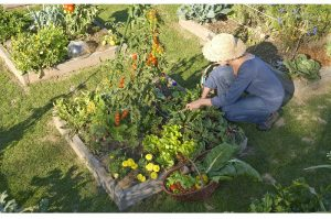 Que faire au jardin en septembre - Que faire au jardin en septembre et octobre ...